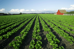 Assembly Passes Agriculture Overtime Bill