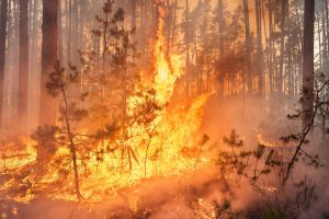 Wildfire Reminders: Employers Have Obligations and Must Take Precautions to Protect Employees