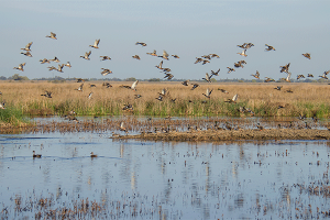 Defining Wetlands: It's a Process - Capitol Insider