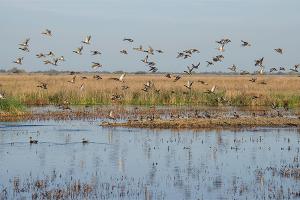 Defining Wetlands: It's a Process - Capitol Insider