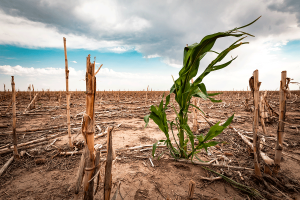 The Consequences of Drought