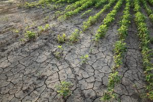 Drought has California Farms Destroying Crops, Rather Than Pay for Water
