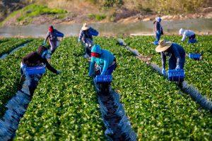 Farmworkers Deserve Democratic Protections